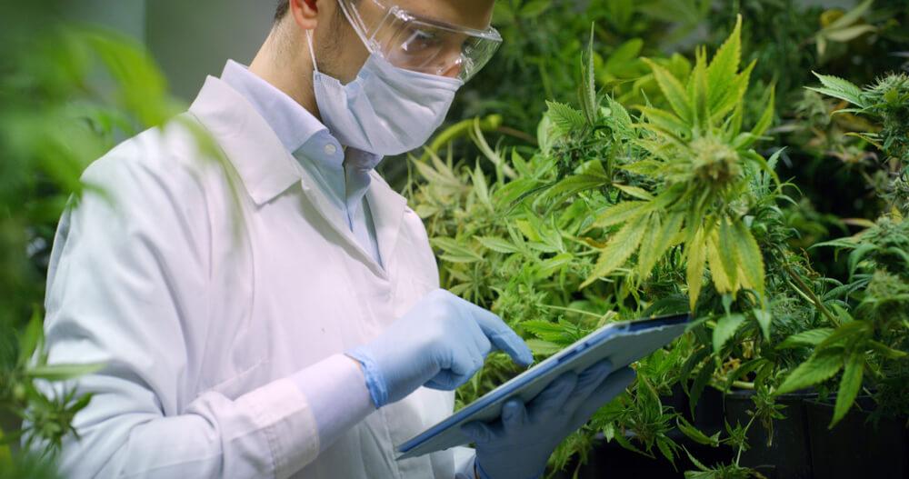 Scientist | Cannabis Industry | Bulldog Marketing